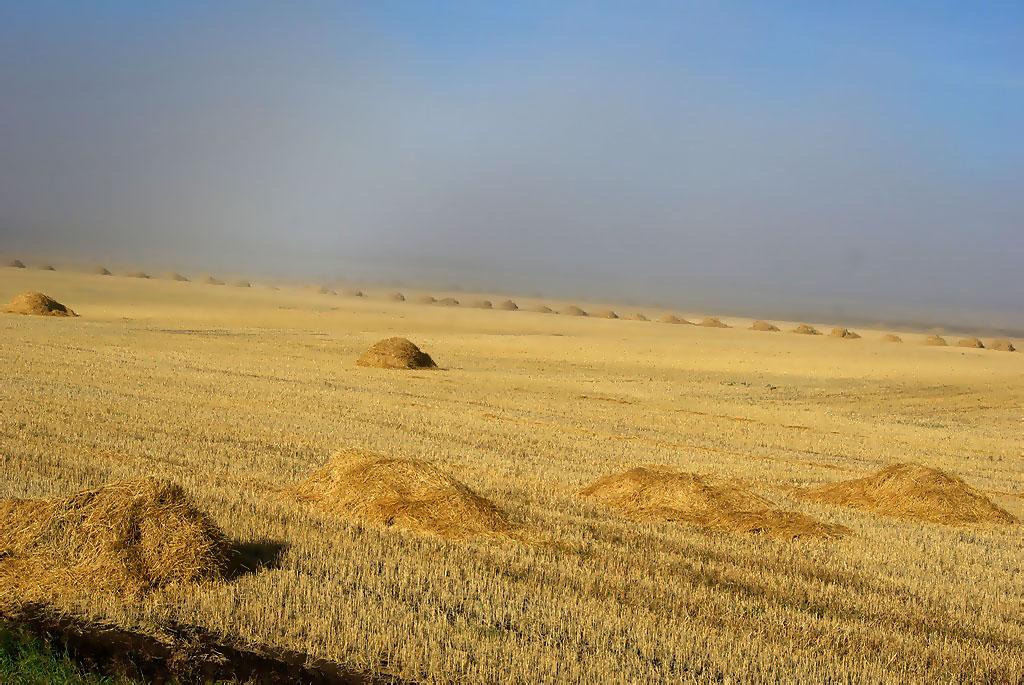 Министерство сельского хозяйства Челябинской области объявило конкурс для фотографов. Участники,