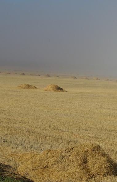 Фермеры и агрокомпании Челябинской области представят свою продукцию в Екатеринбурге на IX межрег