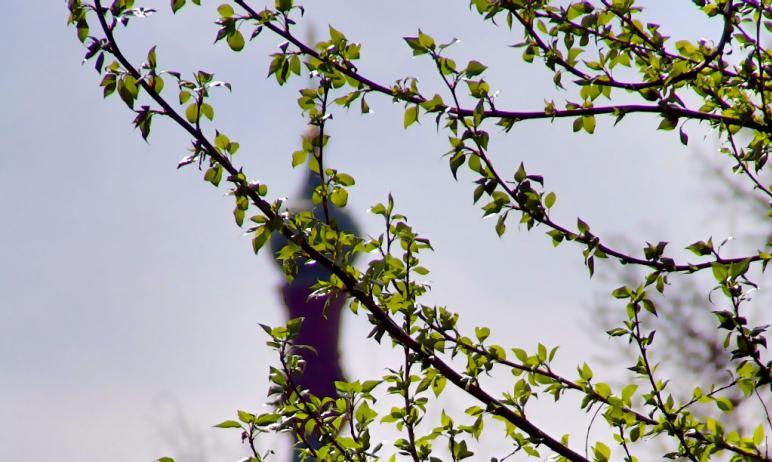 Жителей Челябинской области предупреждают об усилении ветра и существенном потеплении.