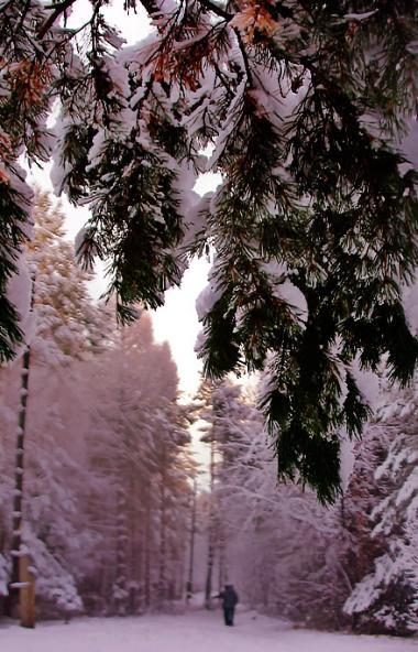 Минувшей ночью на всей территории Челябинской области установился снежный покров, его высота дост