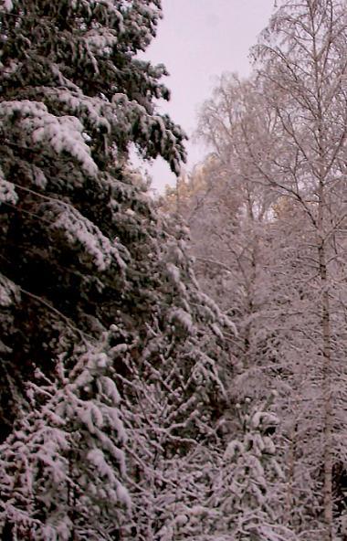 Жителей Челябинской области предупредили о крепких морозах на фоне высокого атмосферного давления