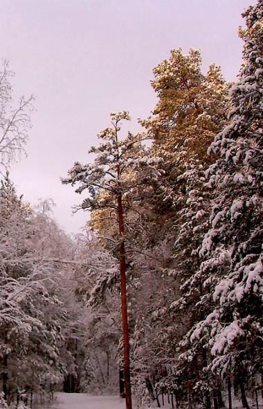 В четверг, 30 января, в Челябинской области ожидается переменная облачность, местами небольшой сн