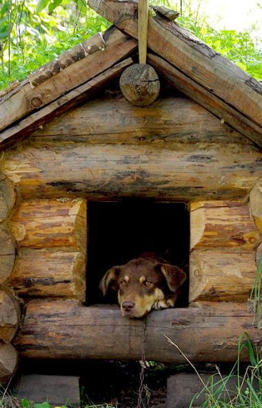 Жители Коркинского района (Челябинская область) заговорили о бесконтрольном отстреле собак. Владе