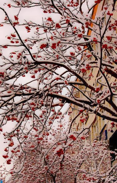 В среду, 13 ноября, в Челябинской области ожидается облачная погода с прояснениями, местами пройд