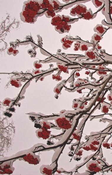 В пятницу, 15 ноября, в Челябинской области ожидается переменная облачность, местами пройдут небо