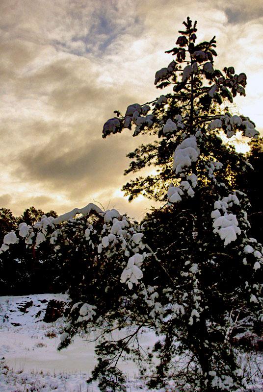 Первый месяц 2019 года традиционно обещает быть морозным и снежным. По прогнозам gismeteo,