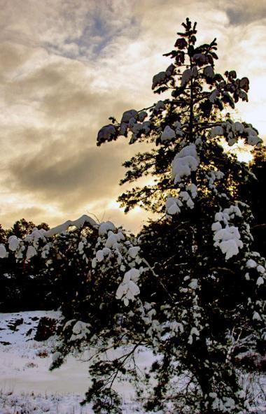 Три предстоящих дня - 23, 24 и 25 ноября - в Челябинской области ожидаются облачными. Солнышко бу