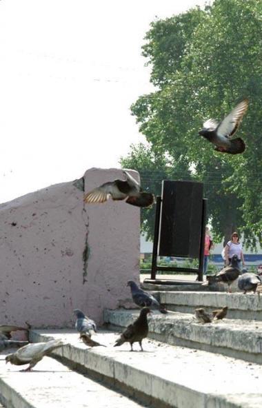 В Челябинске горожане начали находить голубиные трупы. В ветеринарных службах заявляют, что никак