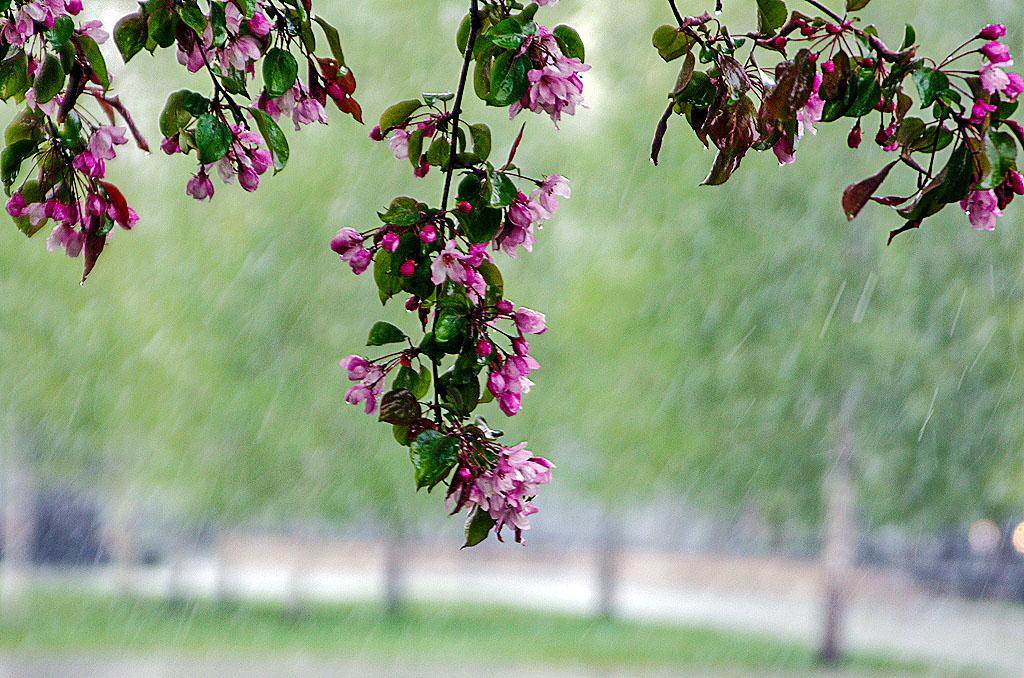 В Челябинской области в мае ожидается пасмурная и дождливая погода. По прогнозам синоптик