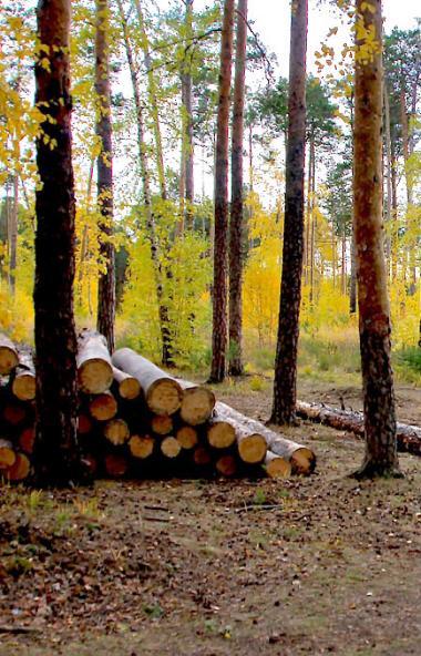 Власти Челябинской области ищут место под строительство современного онкогематологического отделе