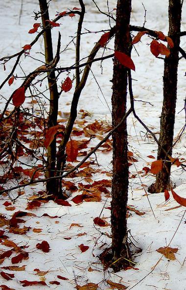 В среду, 6 ноября, в Челябинской области ожидается облачная погода, преимущественно без осадков.