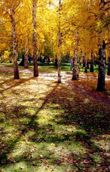 В среду, 9 октября, в Челябинской области ожидается облачная погода с прояснением, пройдет неболь