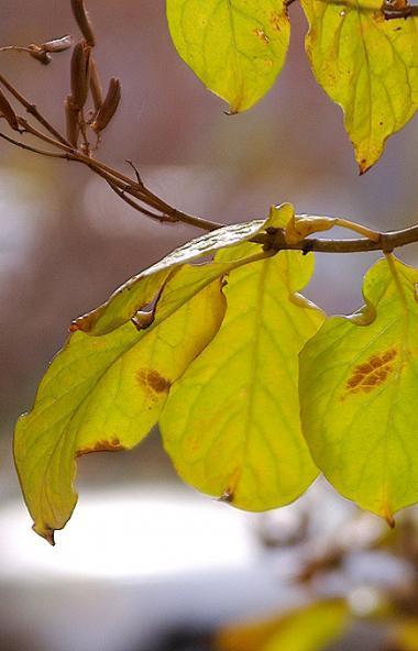В предстоящие выходные, 19 и 20 октября, в Челябинской области ожидается облачная погода с проясн