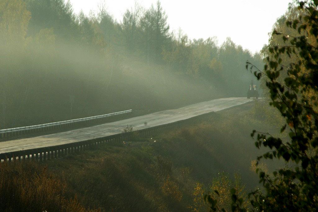 Под Миассом (Челябинская область) водитель погиб после столкновения с лосем. Пассажир иномарки с