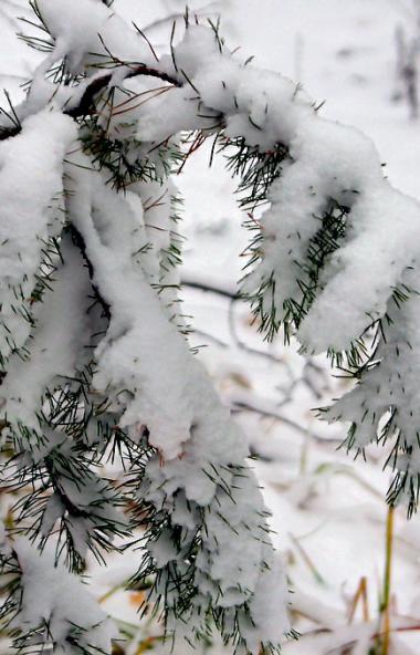В большинстве районов Челябинской области установился временный снежный покров. Его высота достиг