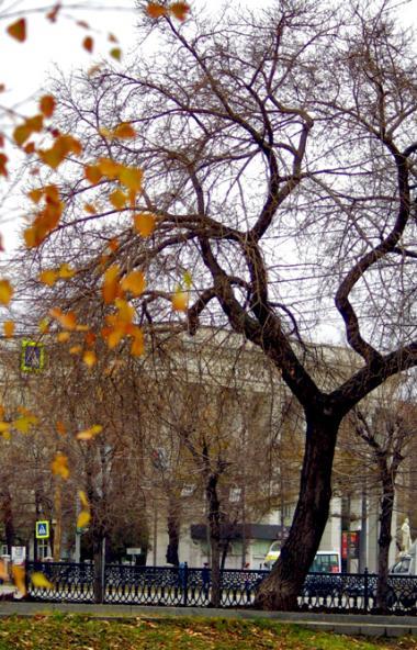 В понедельник, 28 октября, в Челябинской области ожидается переменная облачность, местами пройдут