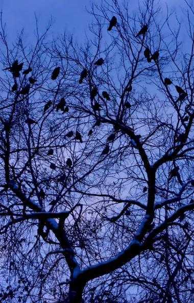 Во вторник, 26 ноября, в Челябинской области ожидается переменная облачность, без существенных ос