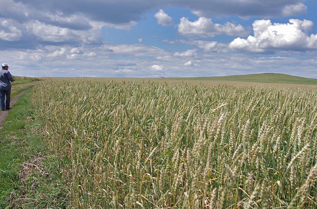 Как доложил губернатору Борису Дубровскому министерств сельского хозяйства области Сергей Сушков,