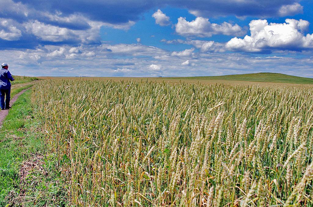 В преддверии уборочных работ и реализации урожая министерство сельского хозяйства Челябинской обл