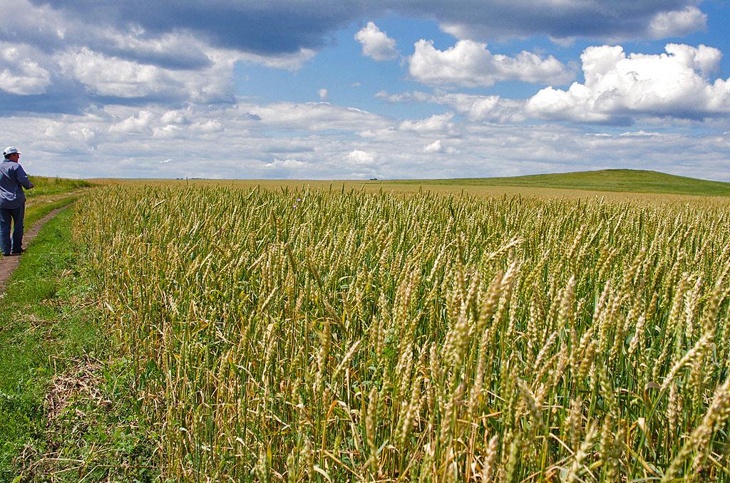 Челябинская область начала подготовку к проведению региональной сельскохозяйственной выставки «Д