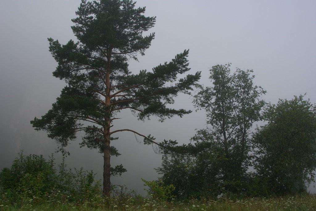 В Аше (Челябинская область) женщины с двумя детьми заблудились в тумане. Три часа потерявшиеся бл