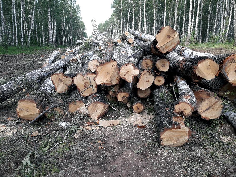 Поправки в Федеральный закон о создании лесопарковых зеленых зон вокруг городов, названные зелены