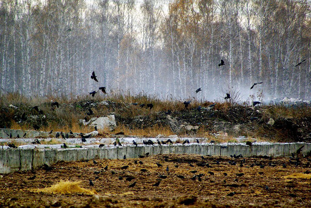 В России по итогам прошлого года составили рейтинг регионов с самым грязным воздухом – первое мес