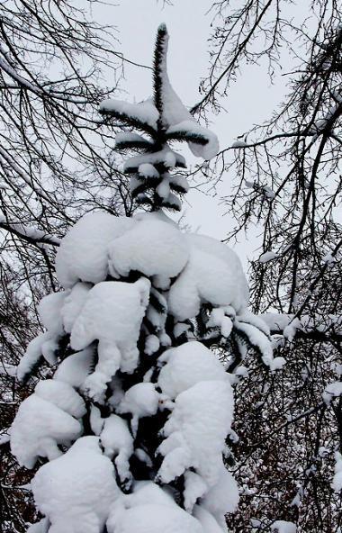 Во вторник, 31 декабря, в Челябинской области ожидается облачная погода, пройдет снег.