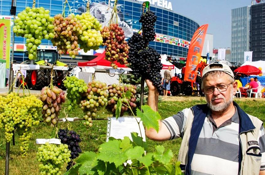 В Южноуральске (Челябинская область) в субботу, восьмого сентября, состоится большой праздник вин