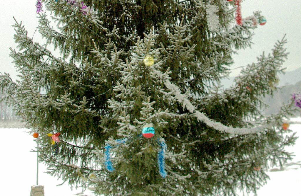 Лесники Челябинской области усилили контроль за рубкой хвойных деревьев в преддверии новогодних п
