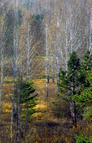 В четверг, 24 октября, в Челябинской области ожидается облачная погода с прояснениями, местами пр