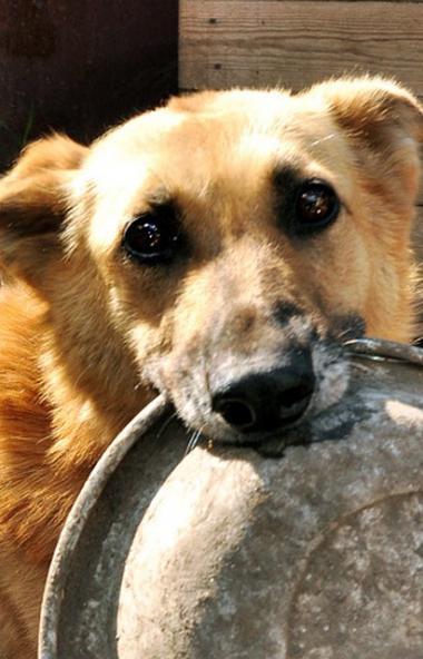 В социальных сетях набираетпросмотры видео пса из Магнитогорска (Челябинская область), кото
