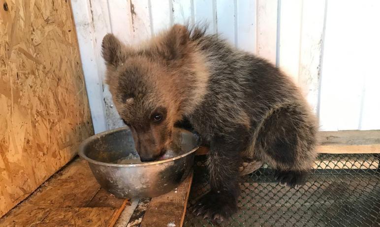 Медвежонка,