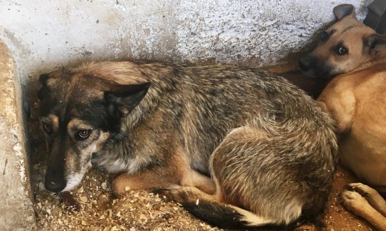 В 2021 году города Челябинской области получат на отлов, транспортировку животных в приюты и их с