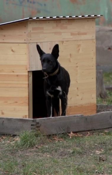 Жители Челябинска выбрали место под площадку для выгула собак в Курчатовском районе. Она будет об