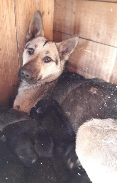 В Челябинской области откроют три государственных приюта для содержания животных, у которых нет в