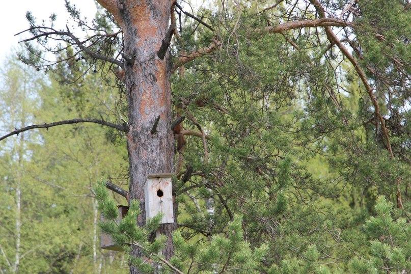 В национальном парке «Таганай» (Челябинская область) может появиться беличий квартал, что шутливо