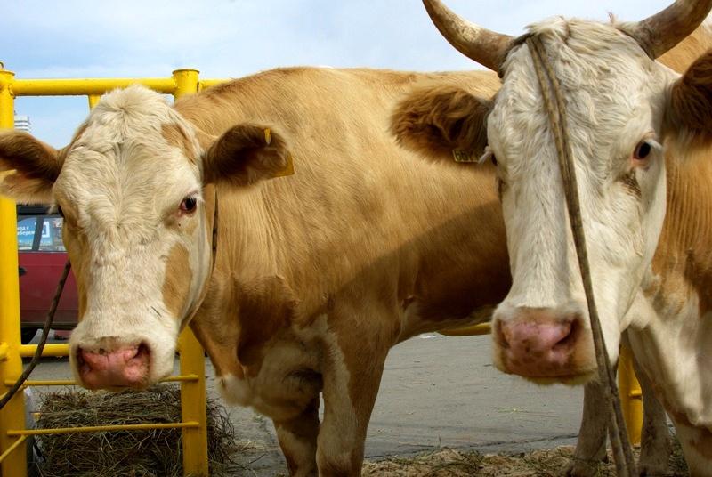Причина – рост розничных цен на молочную продукцию, который, по итогам 2016 года, превысил общий