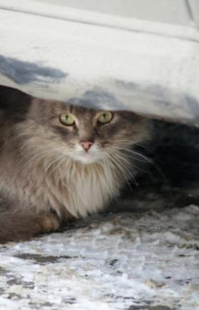 В городе Юрюзань(Челябинская область) на прошлой неделе от бешенства погибла кошка. Подгото