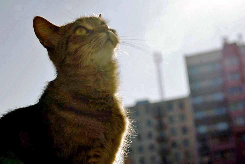 Пожар произошел в ночь на 30 октября. Мужчину разбудило громкое мяуканье кошки. Он