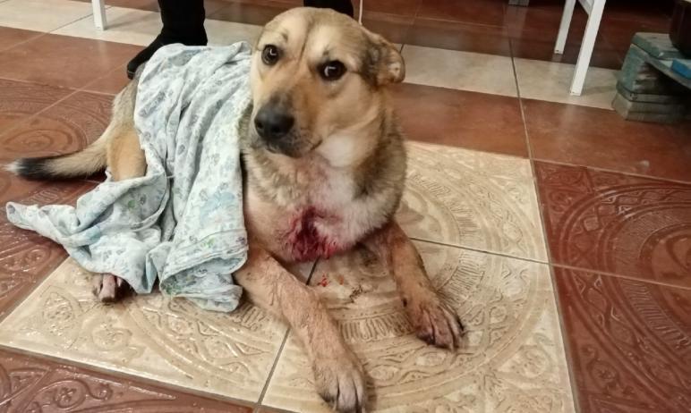 Полиция Магнитогорска (Челябинская область) ищет злоумышленника, который расстрелял собак на терр