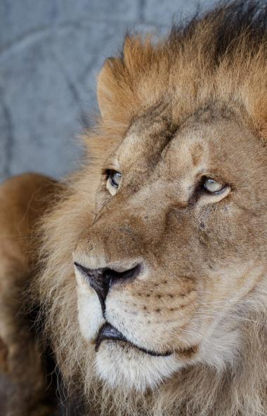 Челябинский зоопарк в очередной раз провел конкурс красоты среди самцов «Мистер Zoo». Интернет-го