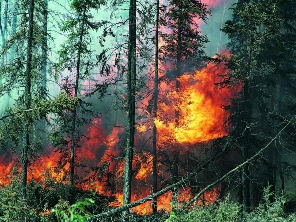 За сутки в лесных массивах зарегистрировано 49 возгораний. Их очаги расположены на территории Кар