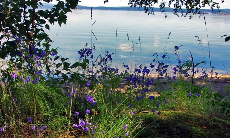 В понедельник, 14 июня, в Челябинской области ожидается ясная, ветреная и жаркая погода.