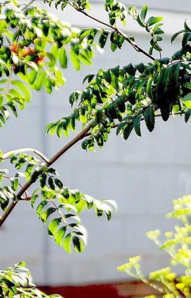 В понедельник, 8 июня, в Челябинской области ожидается жара, порывистый ветер и преимущественно б
