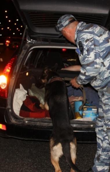 В ближайшие выходные в Челябинской области открывается сезон охоты. В преддверии его полицейские