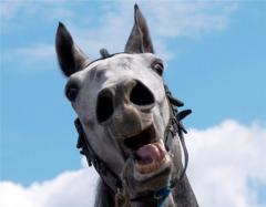 В конное троеборье входят выездка, конкур и кросс. Кросс является главной и отличительной особенн