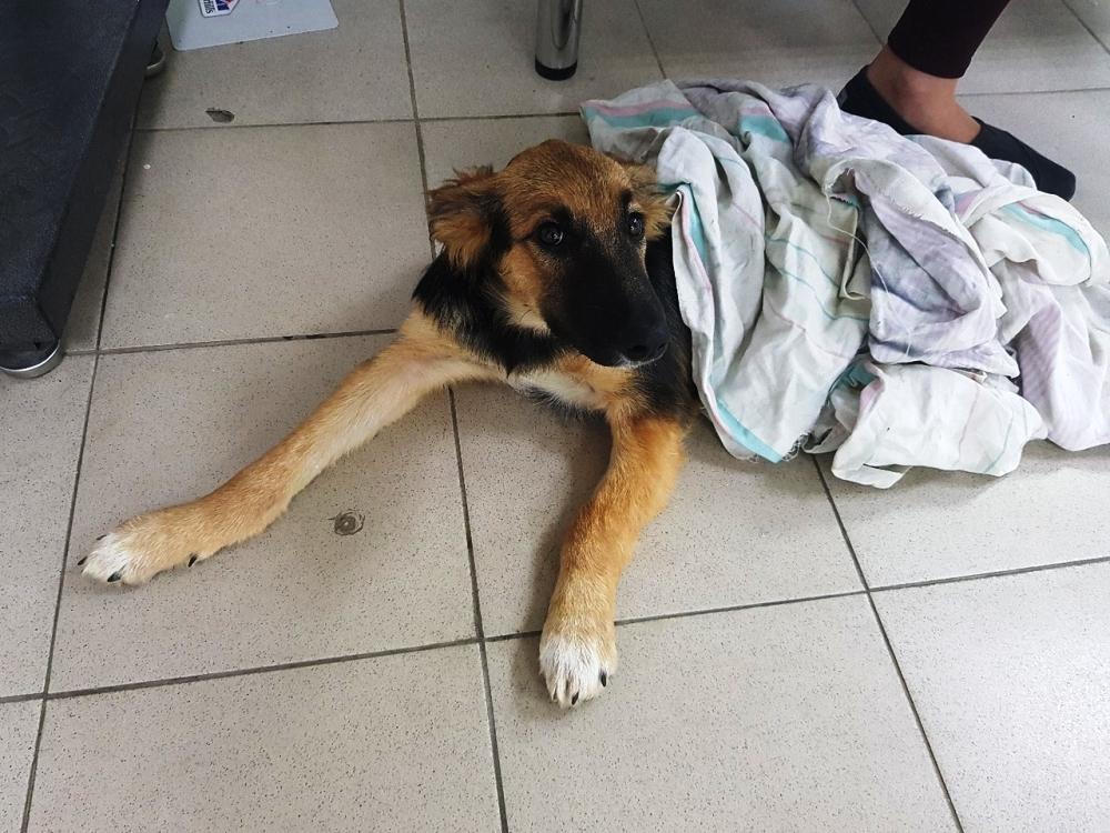 В Челябинске пятимесячный щенок,