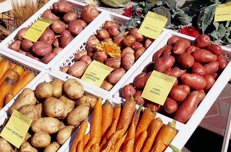 Специалисты расскажут посетителям о представленных сортах картофеля, об особенностях наступающего