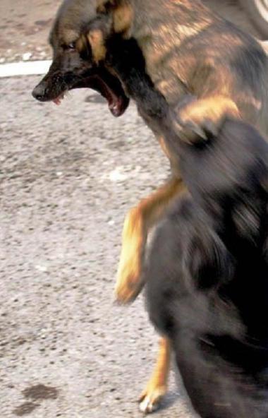 На территории Челябинской области зарегистрированы три случая бешенства животных. В дачном товари